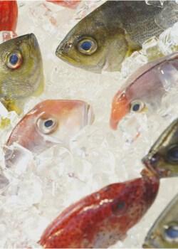 congelar pescado